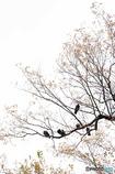 鳩の休憩所