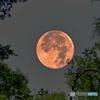 見上げれば月