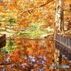 秋色が映り込んだ森の小川