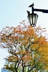 都会の秋色と街灯