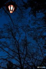 夜の森の優しい灯り