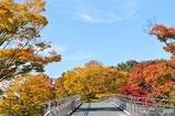 歩道橋と紅葉