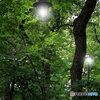 森の中の街灯(2)