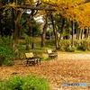 秋色ベンチ