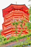 百日紅の花と五重塔