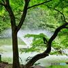 噴水と青モミジ