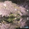 ライトアップ夜桜