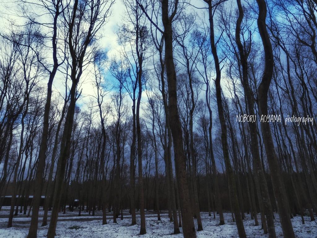 森を広角で切り取り♬