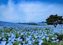 【ご紹介フォト】ひたち海浜公園①(スルーでOK)