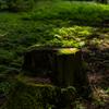 木漏れ日に育まれ