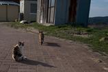 4匹の仔猫物語 第三話 お散歩のお誘い④