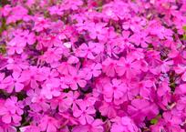 いらっしゃい♪と出迎える花は、きらめく愛の花