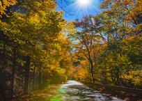 七色フレアと太陽が降り注ぐ道