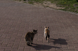 4匹の仔猫物語 第三話 お散歩のお誘い③