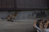 4匹の仔猫物語 第一話 甘えん坊の仔猫ちゃんたち①
