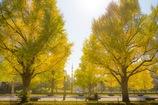 秋色の休日