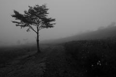 霧のコスモス園