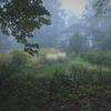 霧雨の庭園