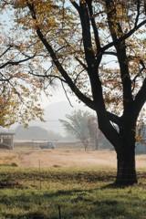 牧場の朝~秋編