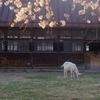 牧場の春~夕暮れ