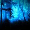 青の森への入り口