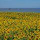 佐渡島の夏