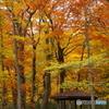 秋の中の四阿