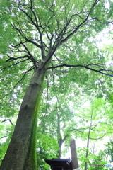 ねりまの名木