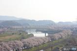果ては霞む千本桜