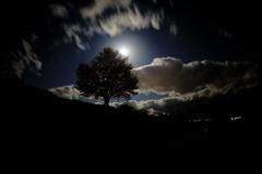 月明かりに照らされて