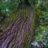 ジブリっぽい木
