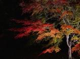 馬籠の紅葉