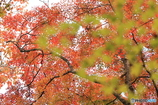 紅葉の季節(6)