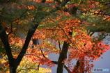 紅葉の季節(4)