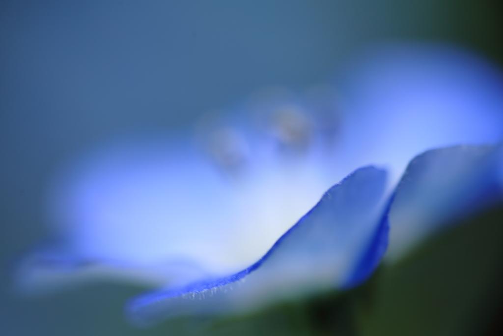 花・ブルー