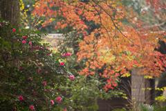 晩秋の彩り(3)