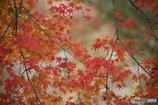 紅葉の季節(5)