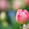 早春の花(2)