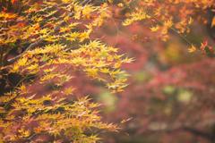 晩秋の彩り(2)