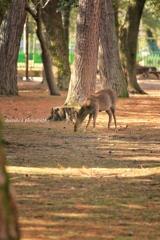 奈良公園photo⑥