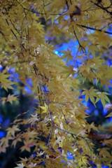 木漏れ日の秋