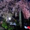 桜の美(ライトアップ)
