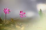 春ですよ~~