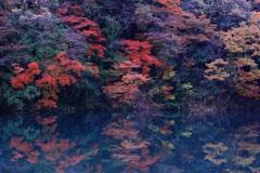 清流板取川●紅葉