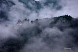 朝霧の山城