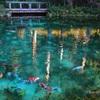 モネの池(名もなき池)