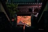 温泉寺ライトアップ
