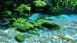 綺麗な水と苔