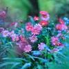 春色の世界