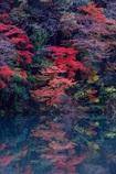 紅葉水鏡Ⅱ